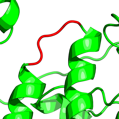 a protein loop